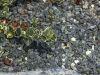 Splitt aus Serpentin - Serpentinit, Schroppen, Naturstein aus Polen, grüner Naturstein