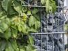 Runde Steine aus Serpentin - Serpentinit für Gabionen, Naturstein aus Polen, Platten, Gartenmöbel aus Natursteinen, Natursteinmauer, Gabionensteine, Gabionenzaun, Gabionenmauer