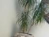 Wyroby z kamienia polnego; koryta kamienne, donice, misy, niecki z kamienia, płyty chodnikowe, elewacyjne, płyty na tarasy, płyty poligonalne, schody z kolorowych kamieni polnych, blaty, stoły, meble, ławki ogrodowe i inne wyroby architektury krajobrazu